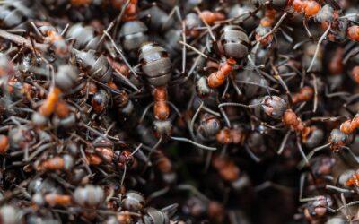 Une classe comme une fourmilière